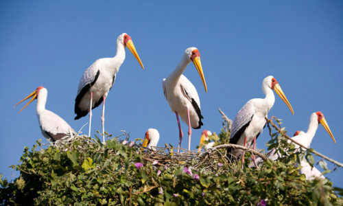 Storks seen on a trip with Tourism First